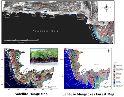 mapping-mangrove